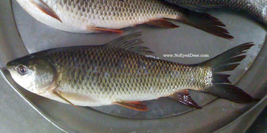 how to clean rohu fish