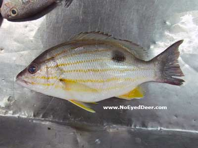 how to cook moses perch
